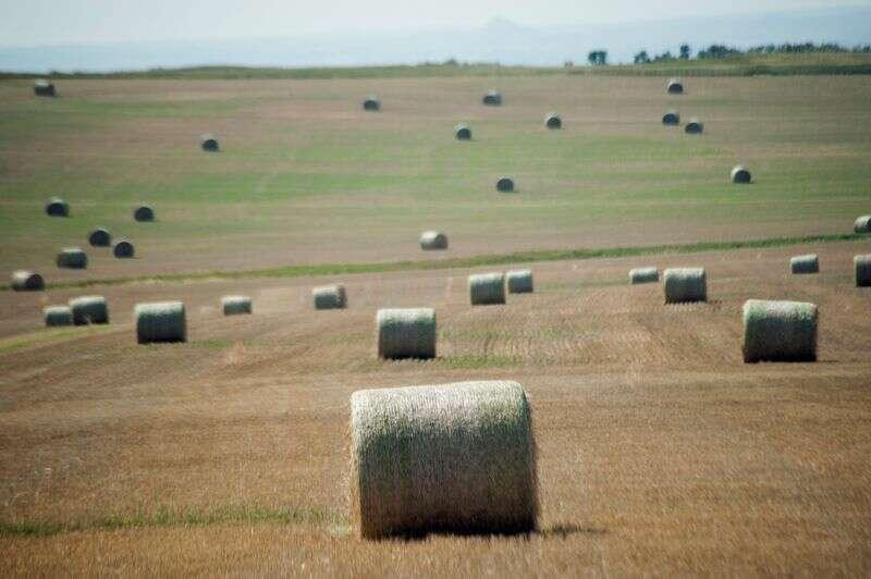 """Nerwowy północnoamerykańskich rolników zestaw do \""""nasion w wierze\"""" w spieczone gleby Reuters"""
